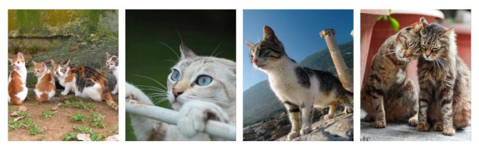 Some of the amazing photos from previous Cats Of The World Photo Exhibitions.