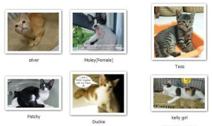 The Public Adoption Bulletin Board at catwelfare.org.