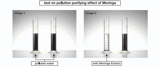Witness the purifying powers of moringa!