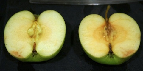 Left half is dry and robbed of hydration. Right half remains moist.