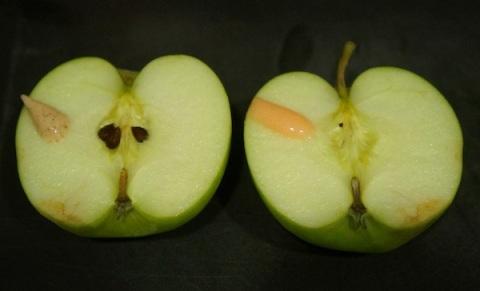 applewblobs