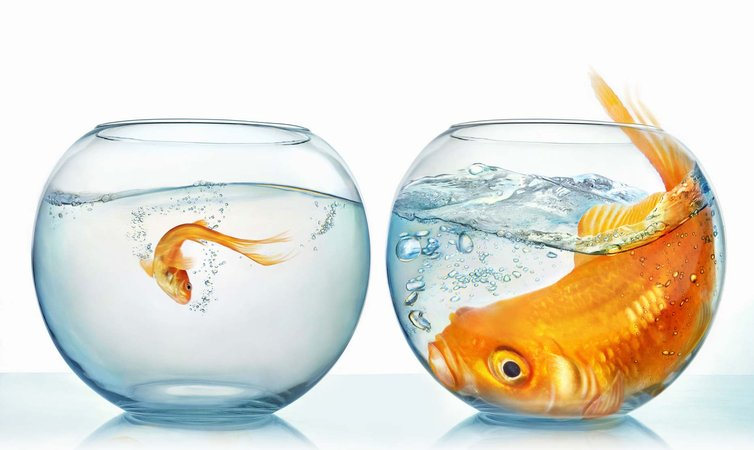 Small fish quotes like success for Large pond fish