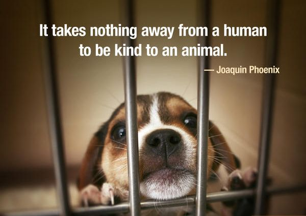 Animal Cruelty Quotes Beauteous Quotes About Animal Cruelty